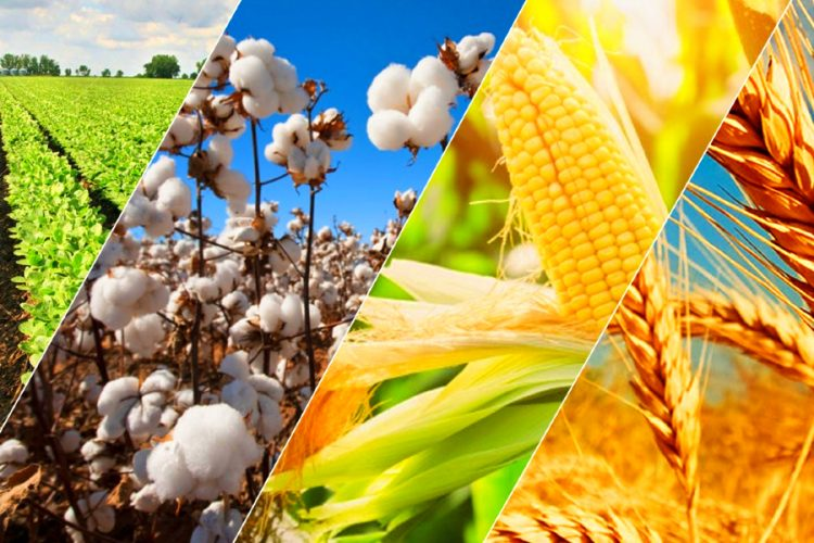 Why Investing in Agriculture commodities can be Lucrative for Value Investors